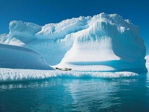 arctika